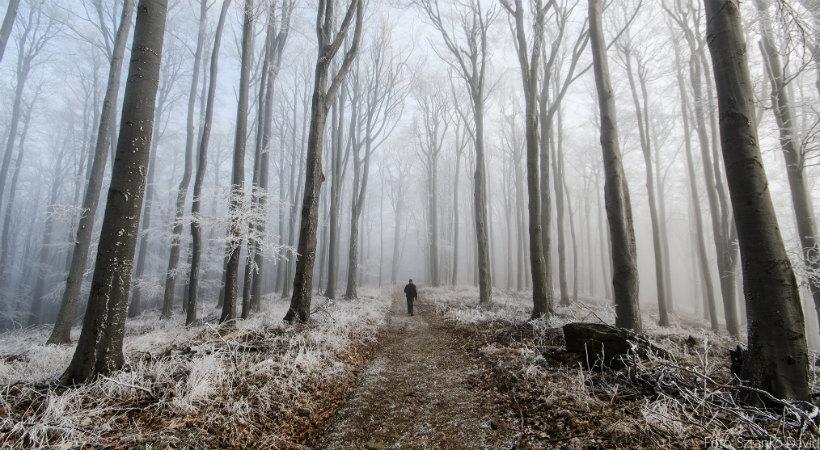 Tél a Börzsönyben