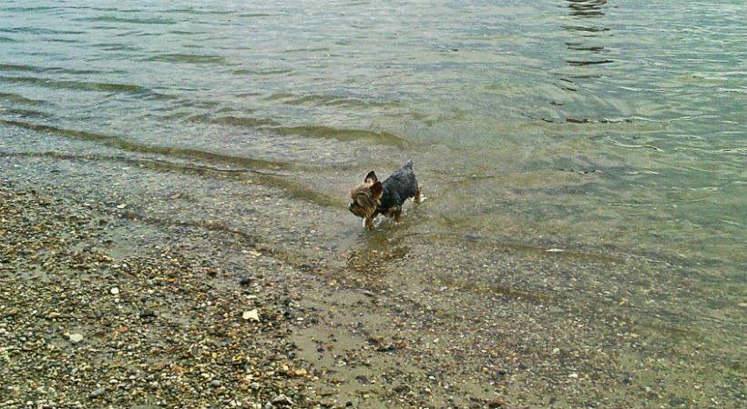 Kutyás utazás a Dunakanyarban
