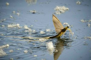 Dunavirágzás a Dunakanyarban
