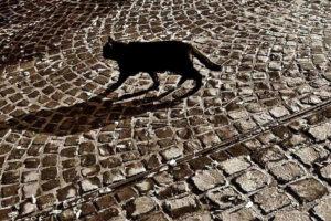 Esztergomi macskalépcső
