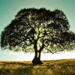 Szentendrén is elültetik a Férfi Felelősség Fáját