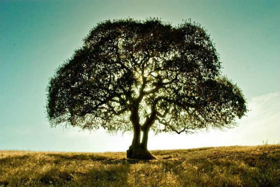 Férfi Felelősség Fája