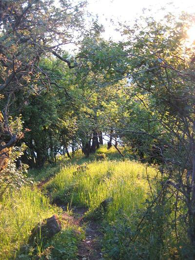 Erdei ösvény a Julianus-kilátóhoz