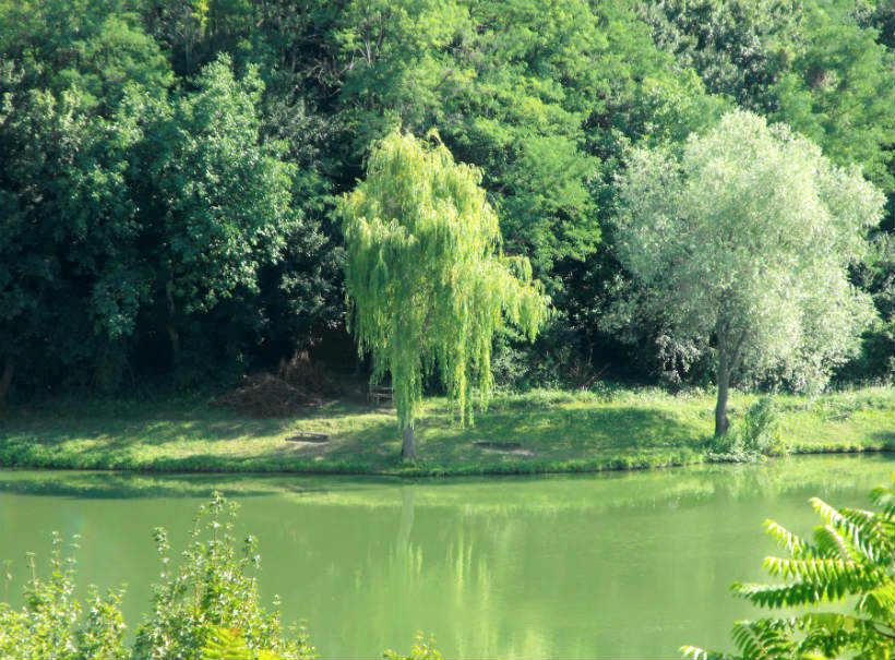 Nagybörzsöny - tó