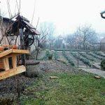 Örökség a nagyszülőktől - Pilisi Levendula
