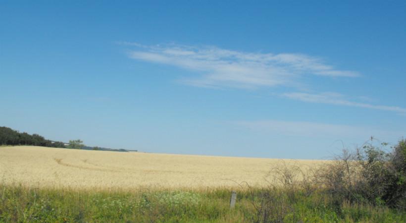 Vámosmikola - szántóföld