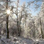 Dobogókő télen: mesebeli képet fest a behavazott Dunakanyar!
