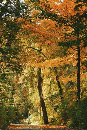 Vácrátóti Arborétum - Botanikus Kert