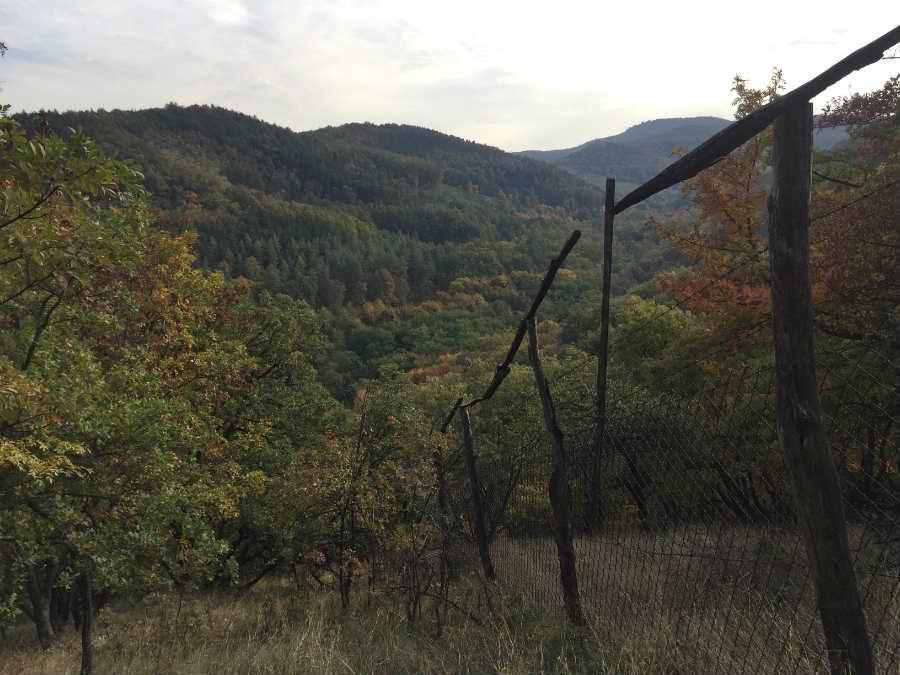 Kirándulás Dunabogdányban