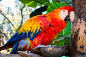 Papagáj kiállítás