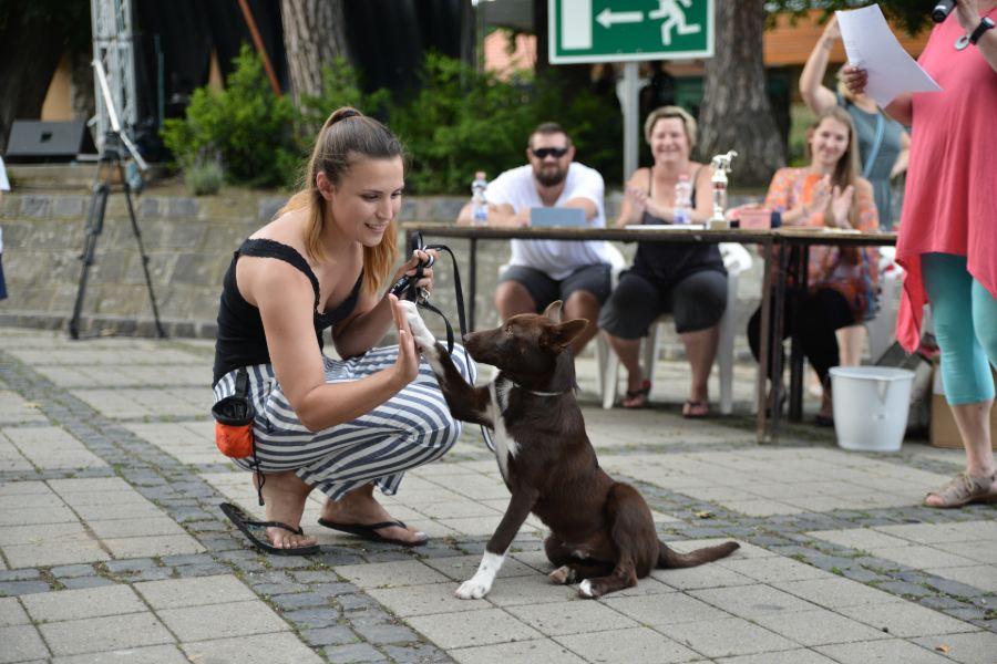 Nagymaros, Keverék kutya szépségverseny