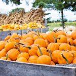 Kihagyhatatlan őszi programok a Skanzenben
