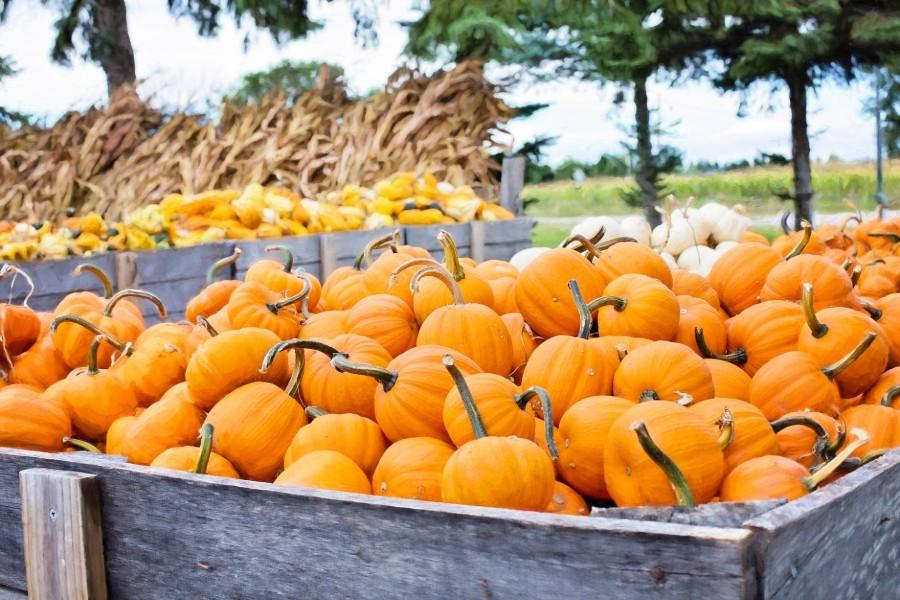 Tökös hét, októberi program Szentendre