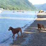 kutyabarát kirándulóhely