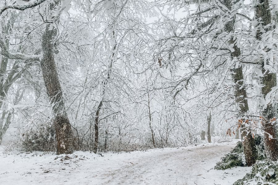 Erdei kirándulás télen
